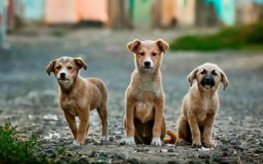 Κακοποίηση ζώων: Τι αποκαλύπτει για τον δράστη και τον χαρακτήρα του;